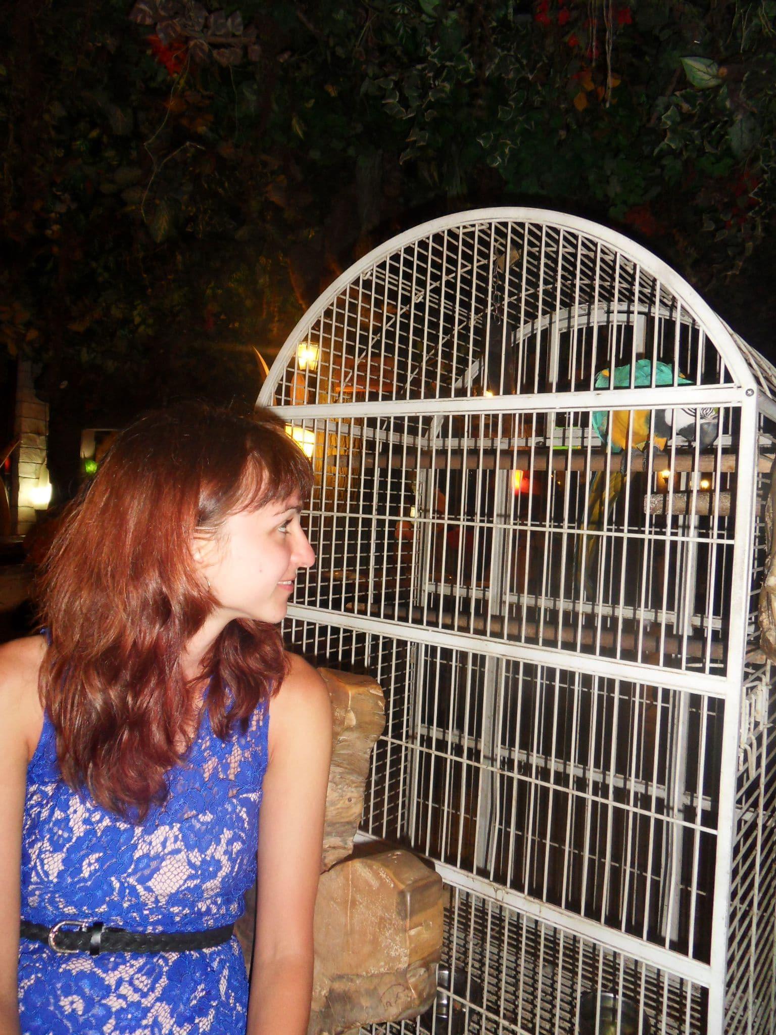 веселый попугай