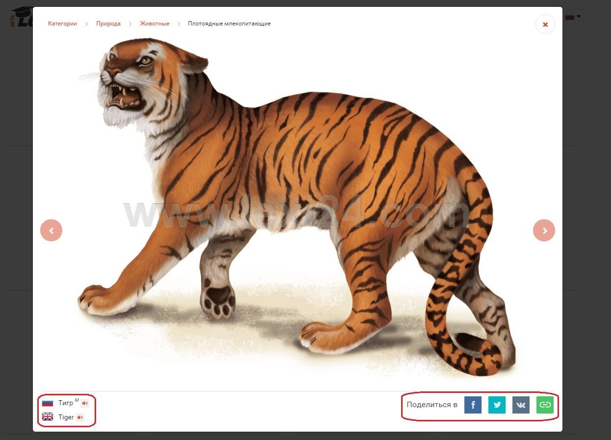тигр на английском