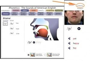 -голосового-тракта-300x205 Отрабатываем произношение на uIowa