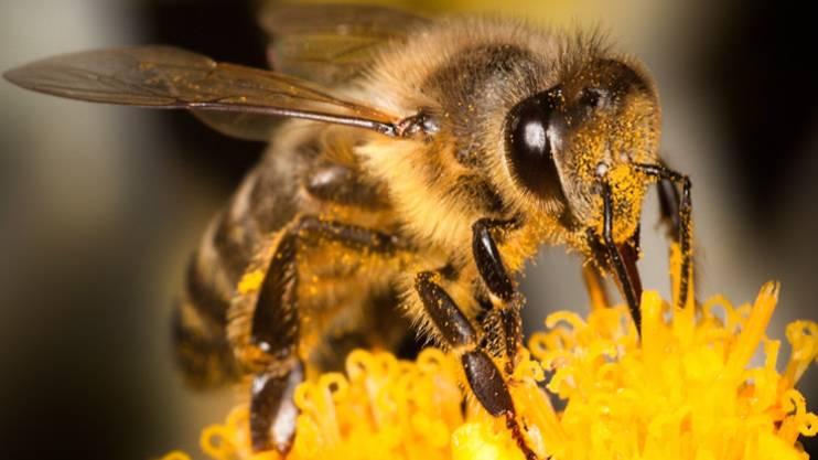 Старинное английское выражение to have a bee in your bonnet