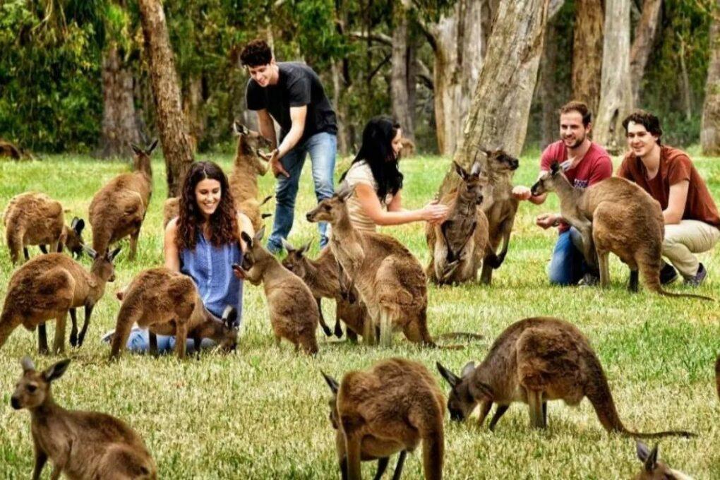 -шоу-с-уникальными-животными-1020x680 Как легко выучить английский, путешествуя по Австралии